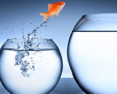 cambiamento pesce